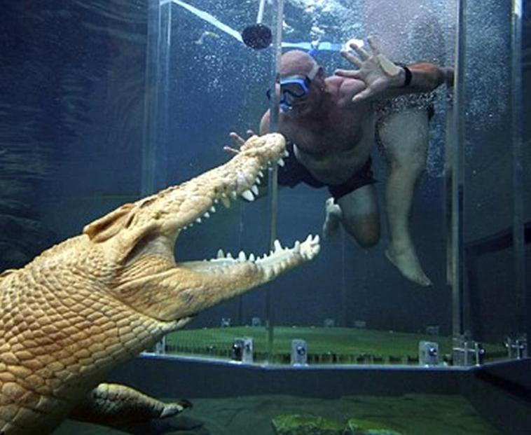 thematiko parko stin afstralia richnei tous touristes se pisina me krokodeilous
