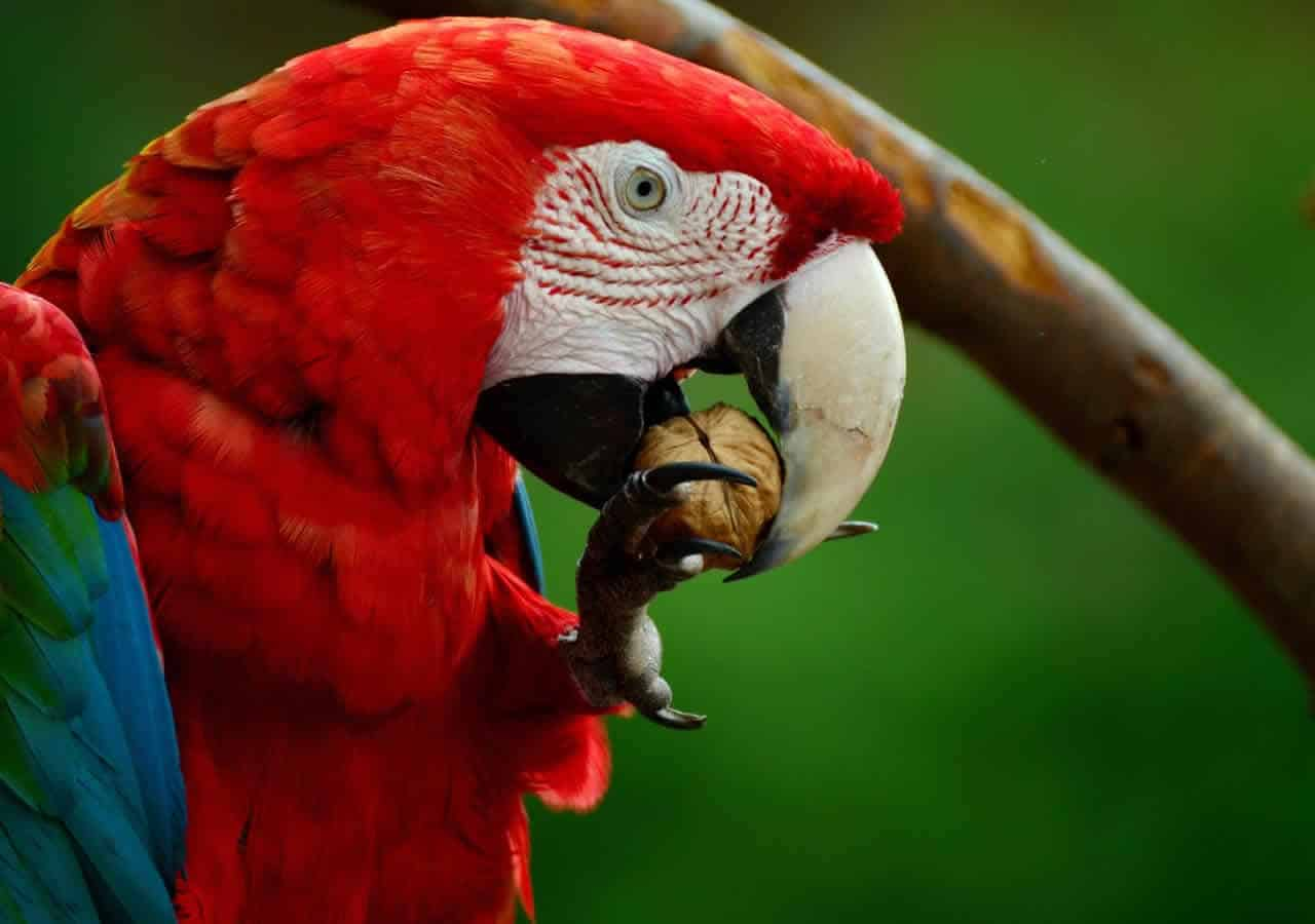 anekdoto treis papagaloi kai o mitsotakis epiko gelio