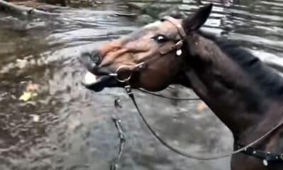 Αυτό είναι το άλογο που έριξε το Youtube! Επικό viral video