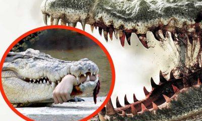 Ο άνθρωπος θεωρείται το πιο επικίνδυνο ζώο στον πλανήτη μας, δυστυχώς για όλα όσα έχει προκαλέσει στα υπόλοιπα ζώα.